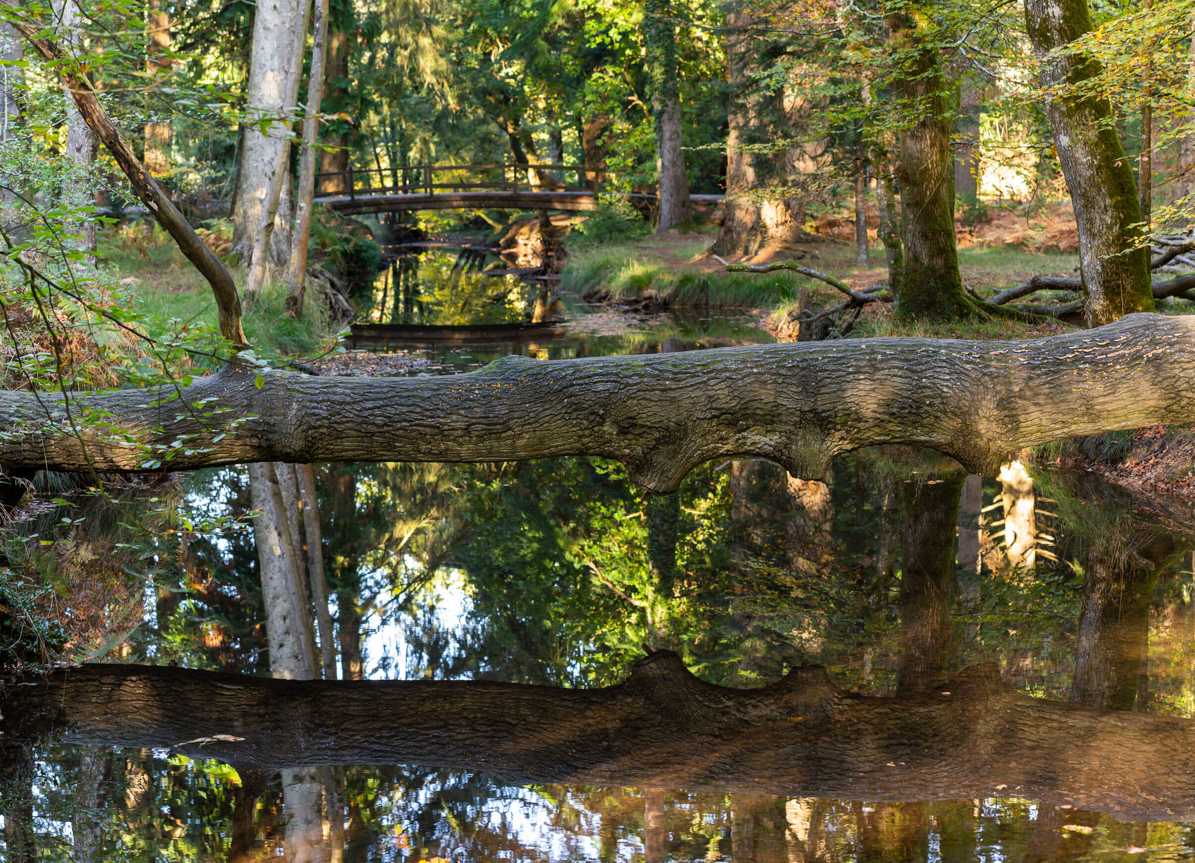 Autum trees, creek and bridge in National Park New Forest, England.