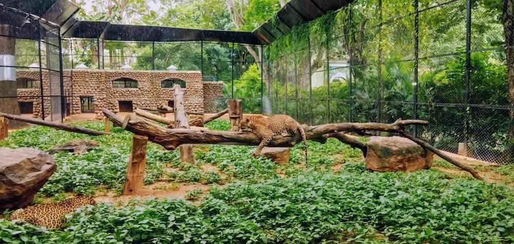 England zoo