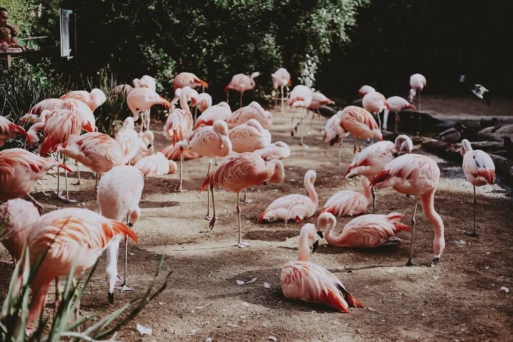 england zoos