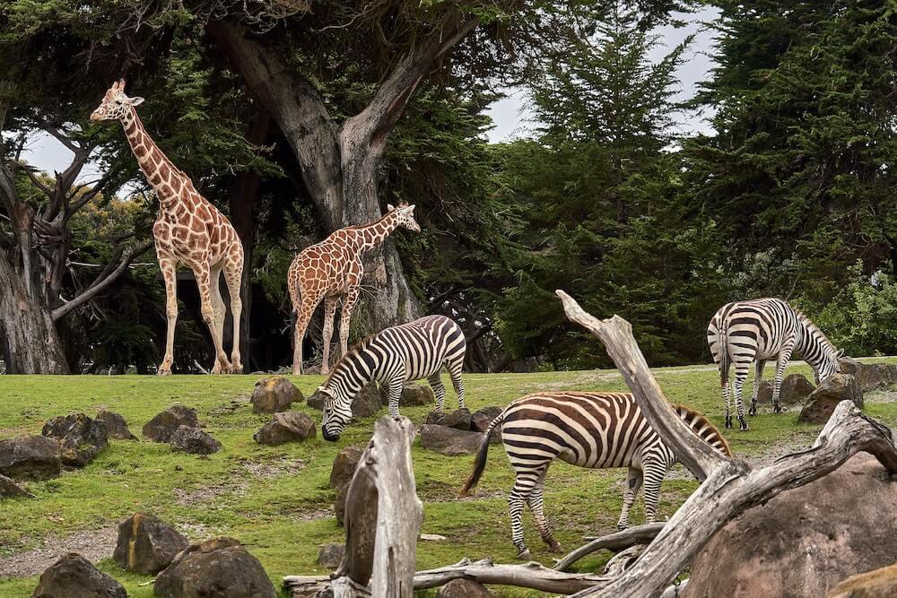 Best zoos in england