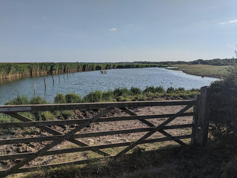walking farlington marshes