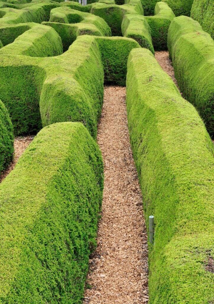 best maze in england