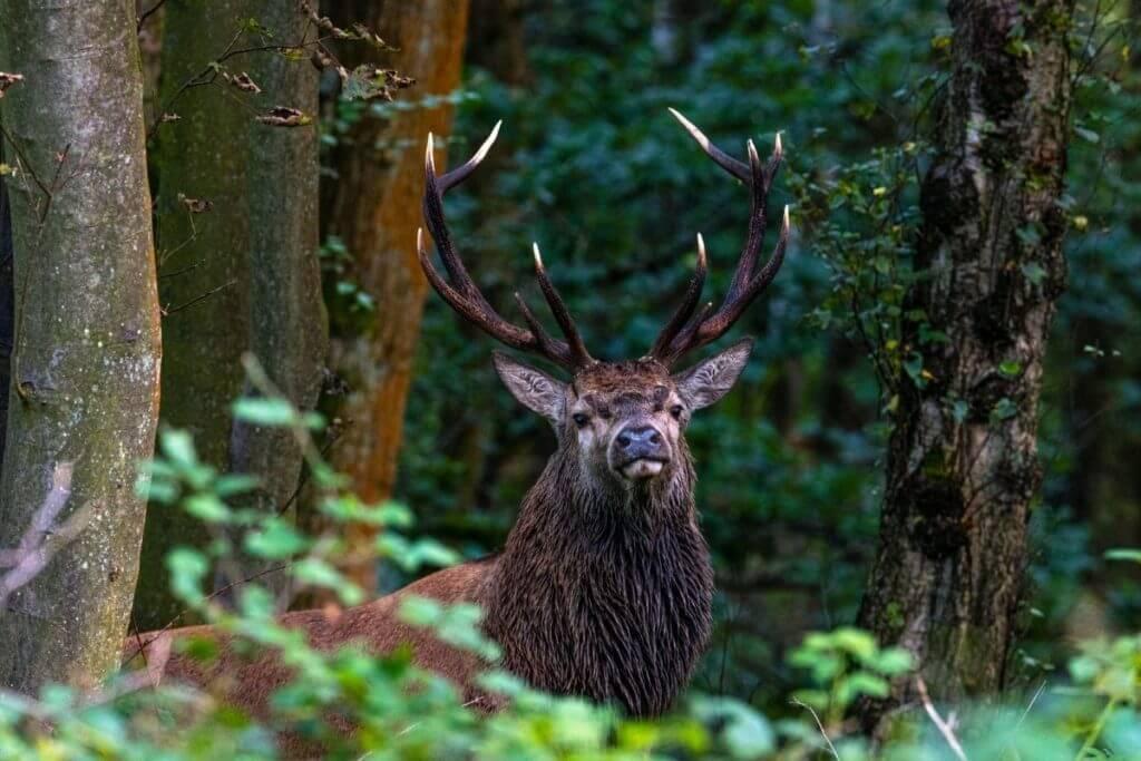 quiz about wildlife in england
