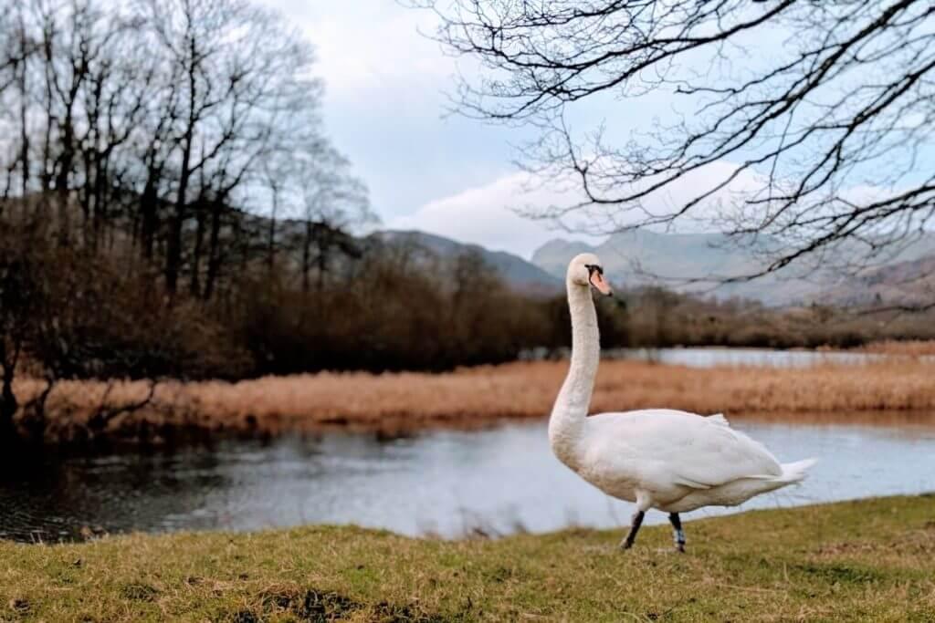 wildlife in england