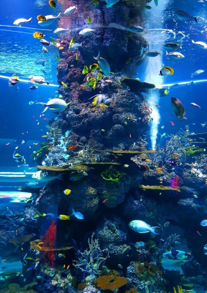 england aquarium