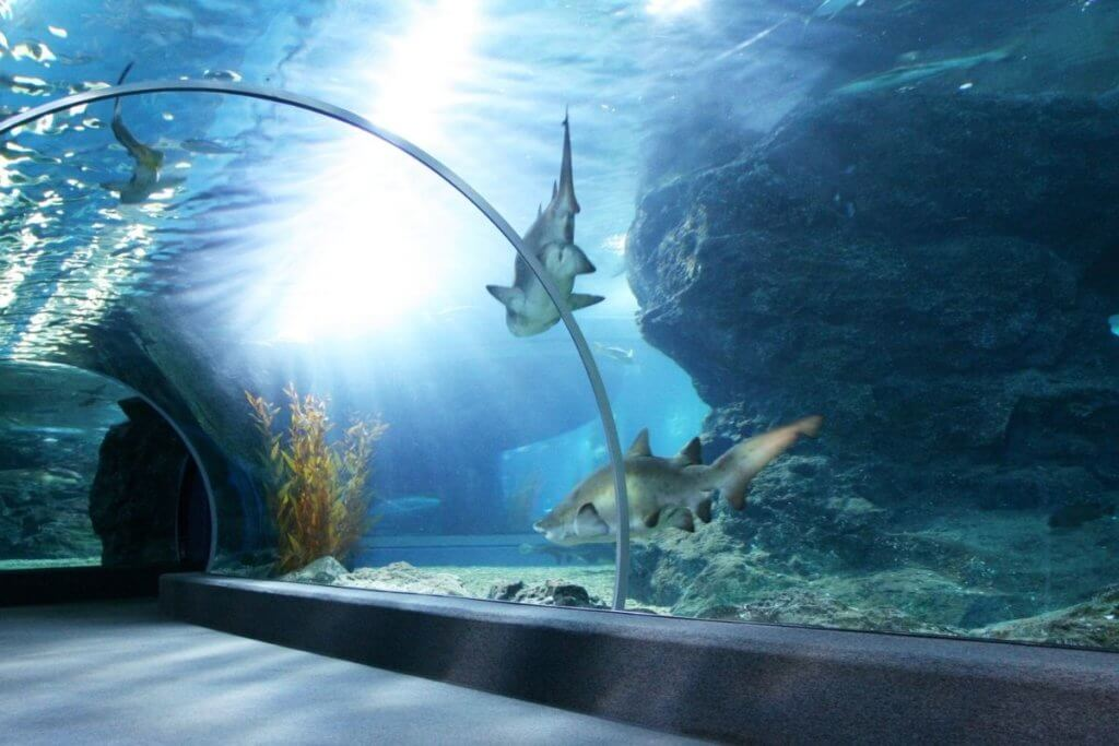 aquariums england