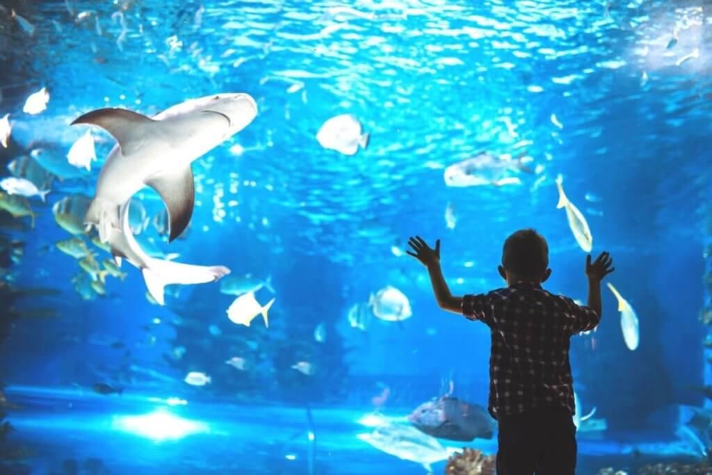 aquarium england