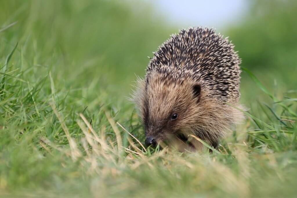 england national animals
