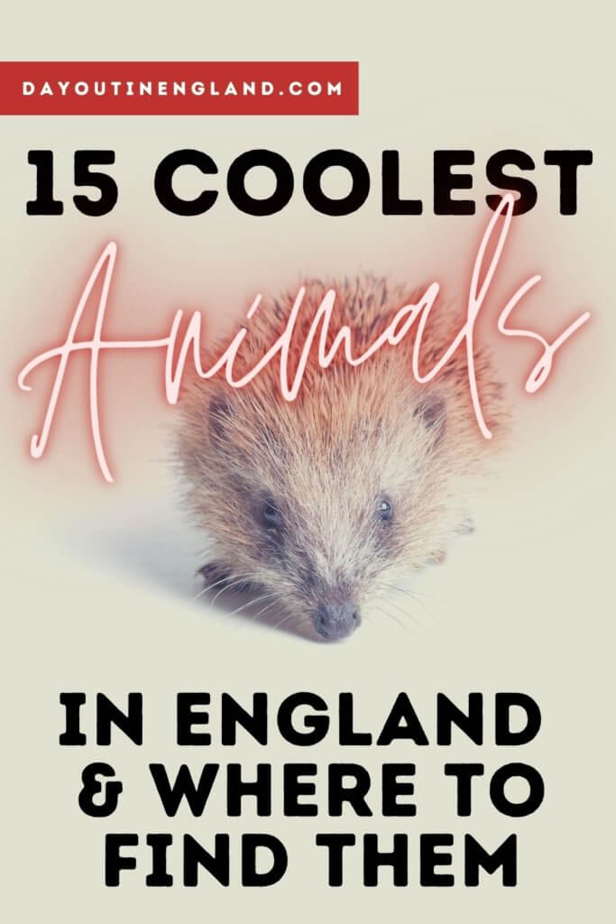 animals in england