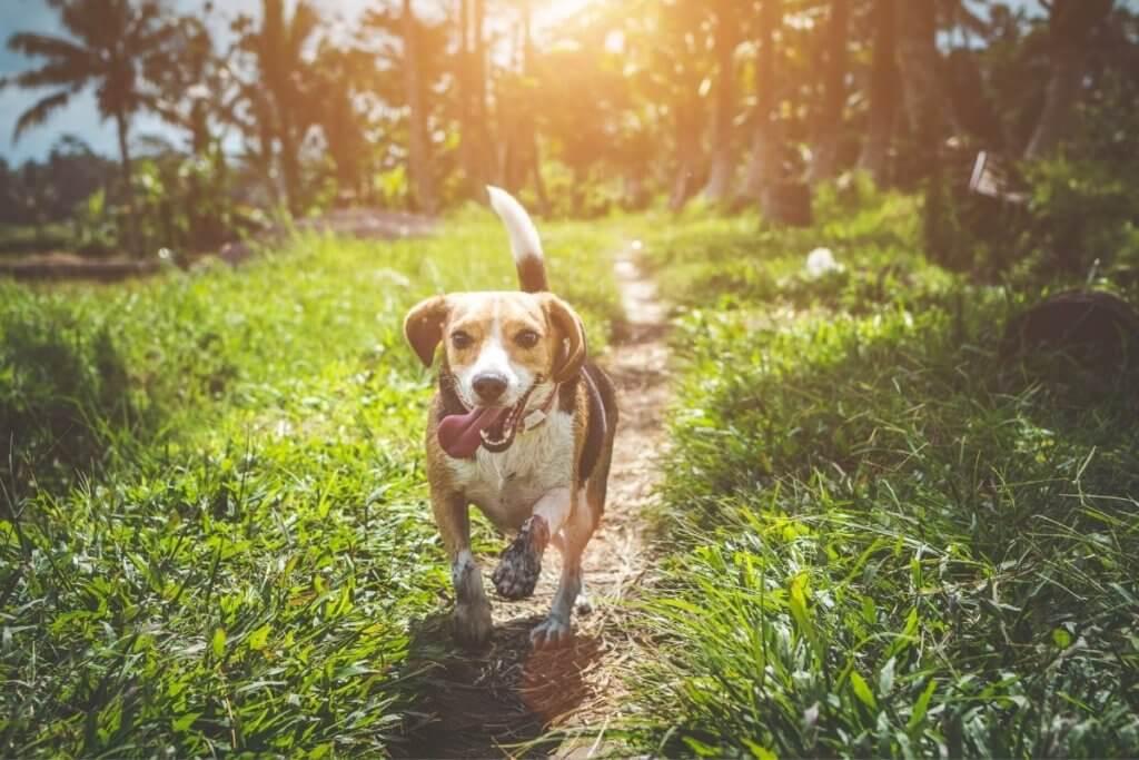 country garden dog
