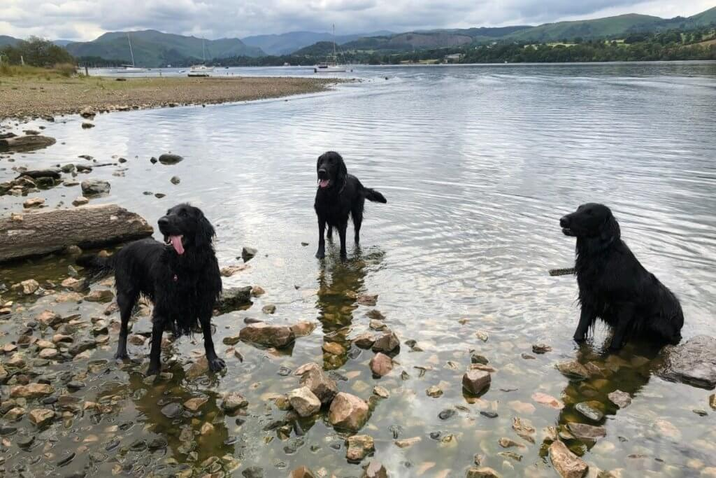 dogs in the lakes