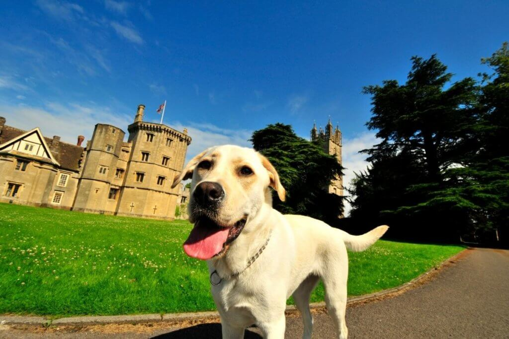historic sites with a dog