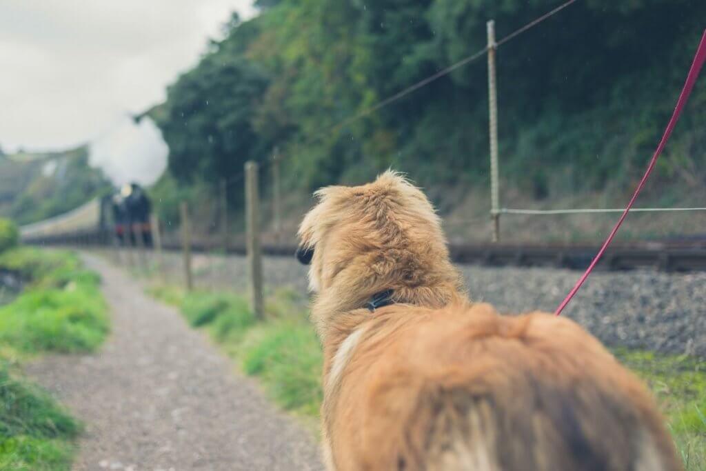 dog on the train