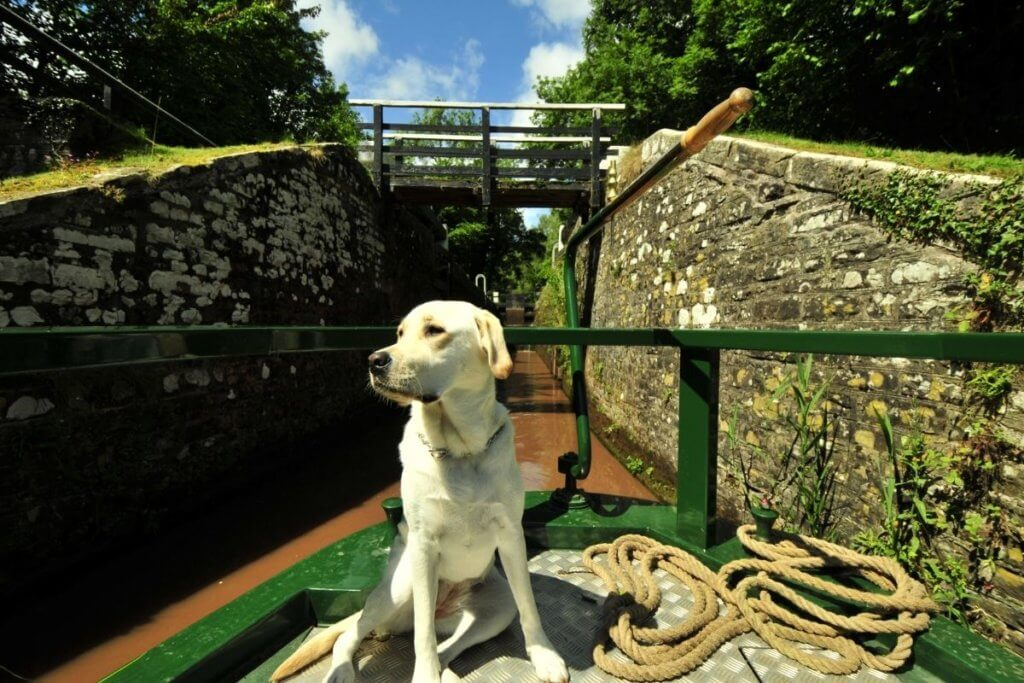 dog on the canals