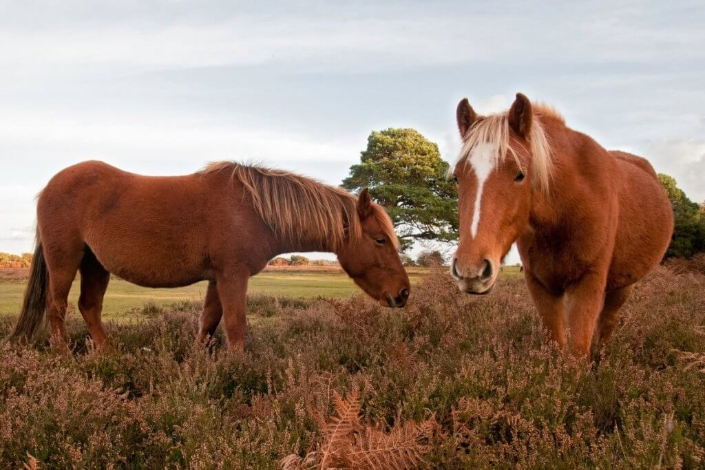 day out in new forest