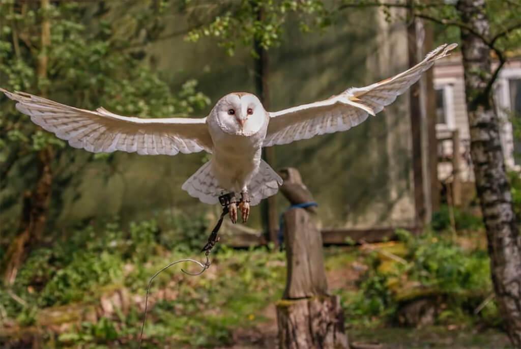 Rutland Falconry & Owl Centre