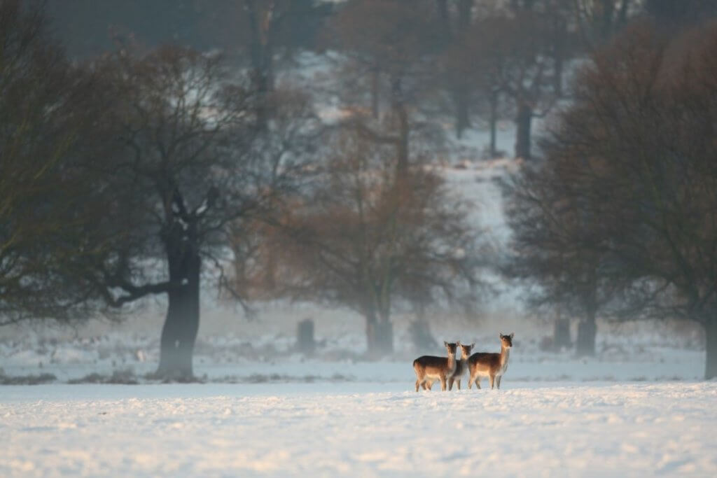 Christmas in Hampshire